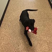 Adopt A Pet :: Millie - Savannah, GA