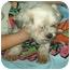 Photo 3 - Lhasa Apso Mix Dog for adoption in Elwood, Illinois - Cher