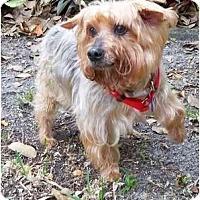 Adopt A Pet :: Kris - West Palm Beach, FL