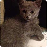 Adopt A Pet :: Boo Boo - Greenville, SC