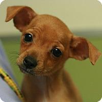 Adopt A Pet :: Walnut - Canoga Park, CA
