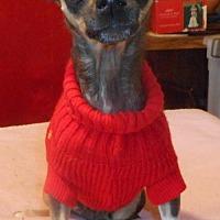 Adopt A Pet :: Christina - Yucaipa, CA