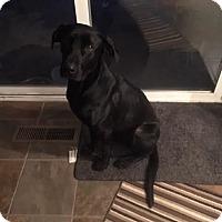 Adopt A Pet :: Blazer - Meridian, ID