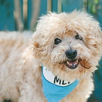 Adopt A Pet :: Periwinkle - Pacific Grove, CA