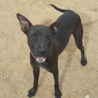 Adopt A Pet :: Axton - Las Cruces, NM