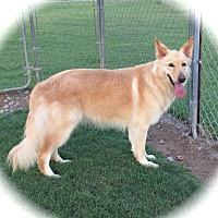 Adopt A Pet :: Blondie-New Photos 8/15 - Stephenville, TX
