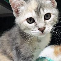 Adopt A Pet :: Suzy - Grants Pass, OR