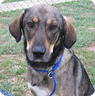 Shepherd (Unknown Type)/Hound (Unknown Type) Mix Dog for adoption in LaGrange, Kentucky - HANK