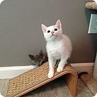 Adopt A Pet :: Venters - Monroe, GA