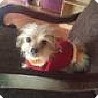 Adopt A Pet :: POOCHIE - RENO, NV