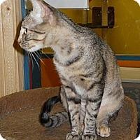 Adopt A Pet :: Jerni - Mobile, AL