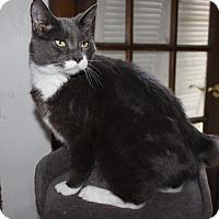Adopt A Pet :: Buddy - Duncan, BC