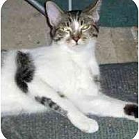Adopt A Pet :: Andy - Pasadena, CA