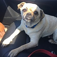 Adopt A Pet :: Whisper - Huntington Beach, CA