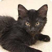 Adopt A Pet :: Scruffy - Naperville, IL