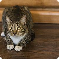 Adopt A Pet :: Summer - Oakland, CA
