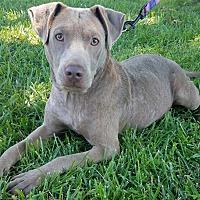 Adopt A Pet :: Katie - Atlantic City, NJ