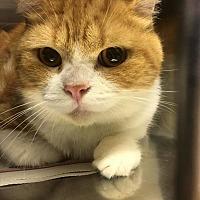 Adopt A Pet :: Seth - Toms River, NJ