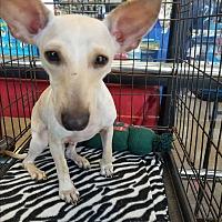 Adopt A Pet :: Dobie - Brownsville, TX