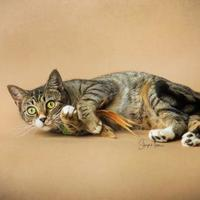 Adopt A Pet :: Molly - Hendersonville, NC