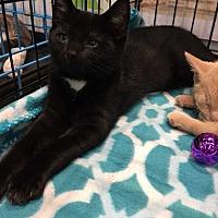 Adopt A Pet :: Harlow - Youngsville, NC