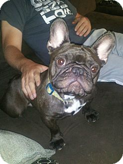 French Bulldog Dog for adoption in Columbus, Ohio - Othello