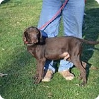 Adopt A Pet :: Gilligan - Lewisville, IN