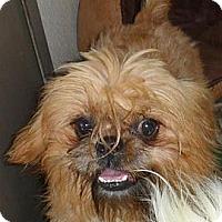 Adopt A Pet :: Talbot - Seattle, WA
