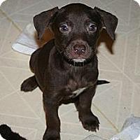 Adopt A Pet :: Theodore - Westfield, IN