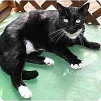 Adopt A Pet :: Bear - La Mesa, CA