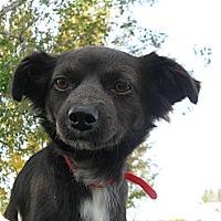 Adopt A Pet :: Ken #5220 - Jerome, ID