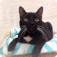 Adopt A Pet :: Gerry - Foothill Ranch, CA