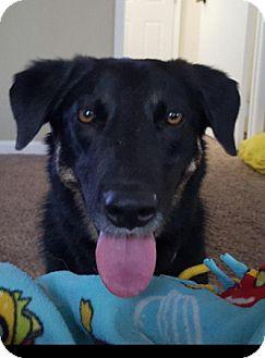 German Shepherd Dog Mix Dog for adoption in Sacramento, California - Bongo