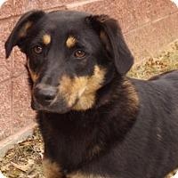 Adopt A Pet :: Ada - Oxford, MS
