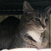 Adopt A Pet :: Leandra - Grand Ledge, MI