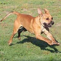 Adopt A Pet :: Zeke - Golsboro, NC