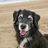 Adopt A Pet :: Flash - Malibu, CA