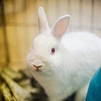 Adopt A Pet :: Casper - Port Coquitlam, BC