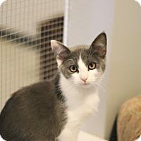 Adopt A Pet :: Doreen - Lincoln, NE