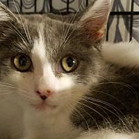 Adopt A Pet :: Omlette - Trevose, PA