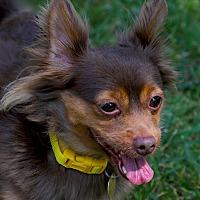 Adopt A Pet :: Mocha - Oakland, CA