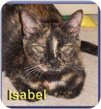 Domestic Shorthair Cat for adoption in Aldie, Virginia - Isabel