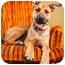 Photo 1 - German Shepherd Dog/Great Dane Mix Dog for adoption in Portland, Oregon - Steven