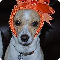 Adopt A Pet :: Tacobella - New Milford, CT
