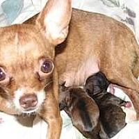 Adopt A Pet :: Diva - Hilliard, OH