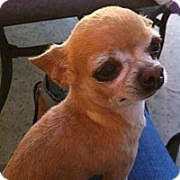 Adopt A Pet :: Max - Goleta, CA