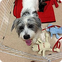 Adopt A Pet :: Freaky - Silsbee, TX