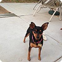 Adopt A Pet :: Tennille - Oceanside, CA