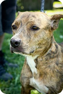 Terrier (Unknown Type, Medium) Mix Dog for adoption in Anderson, Indiana - Jade