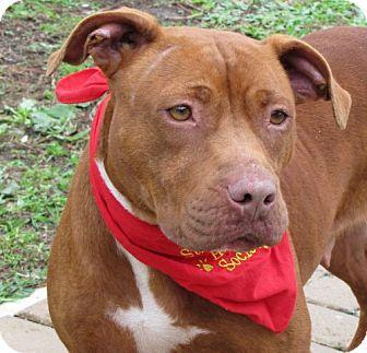 Pit Bull Terrier Mix Dog for adoption in Port St. Joe, Florida - DeAnna